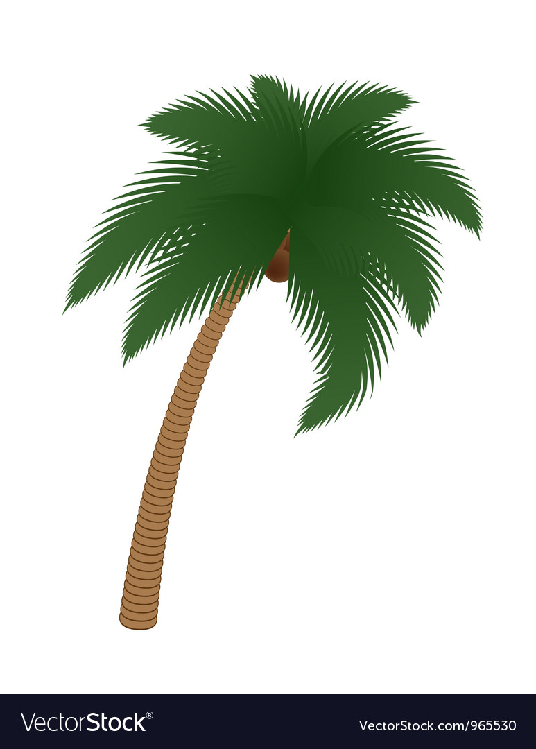 Coconut palm tree vector | Price: 1 Credit (USD $1)