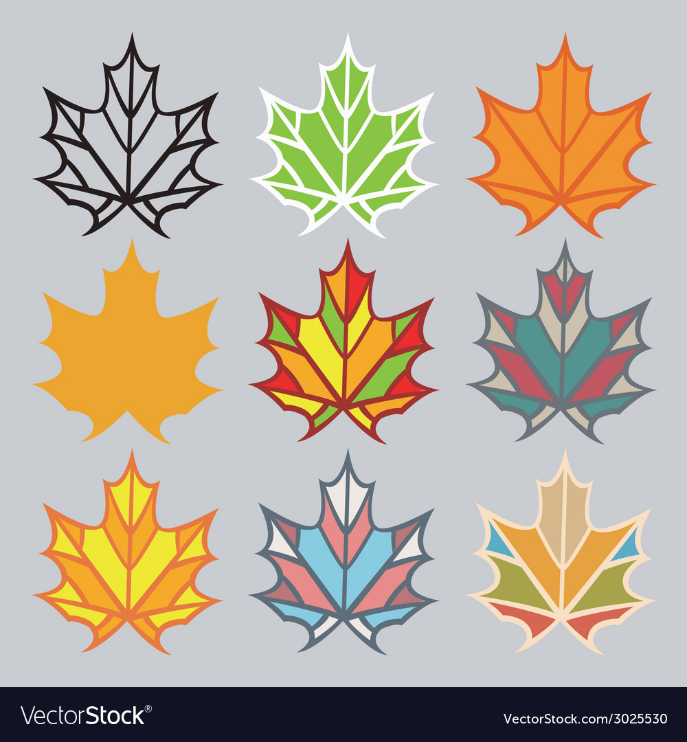 Set of different leaves vector | Price: 1 Credit (USD $1)