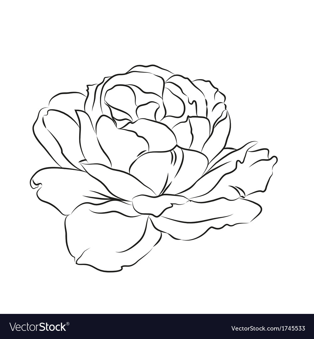 Contour of rose vector | Price: 1 Credit (USD $1)