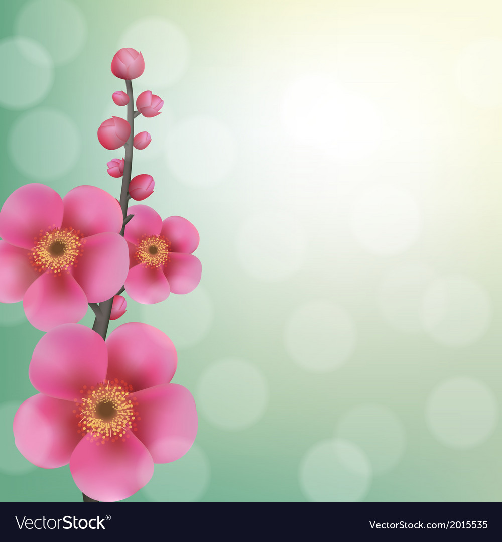 Sakura flowers with bokeh vector | Price: 1 Credit (USD $1)