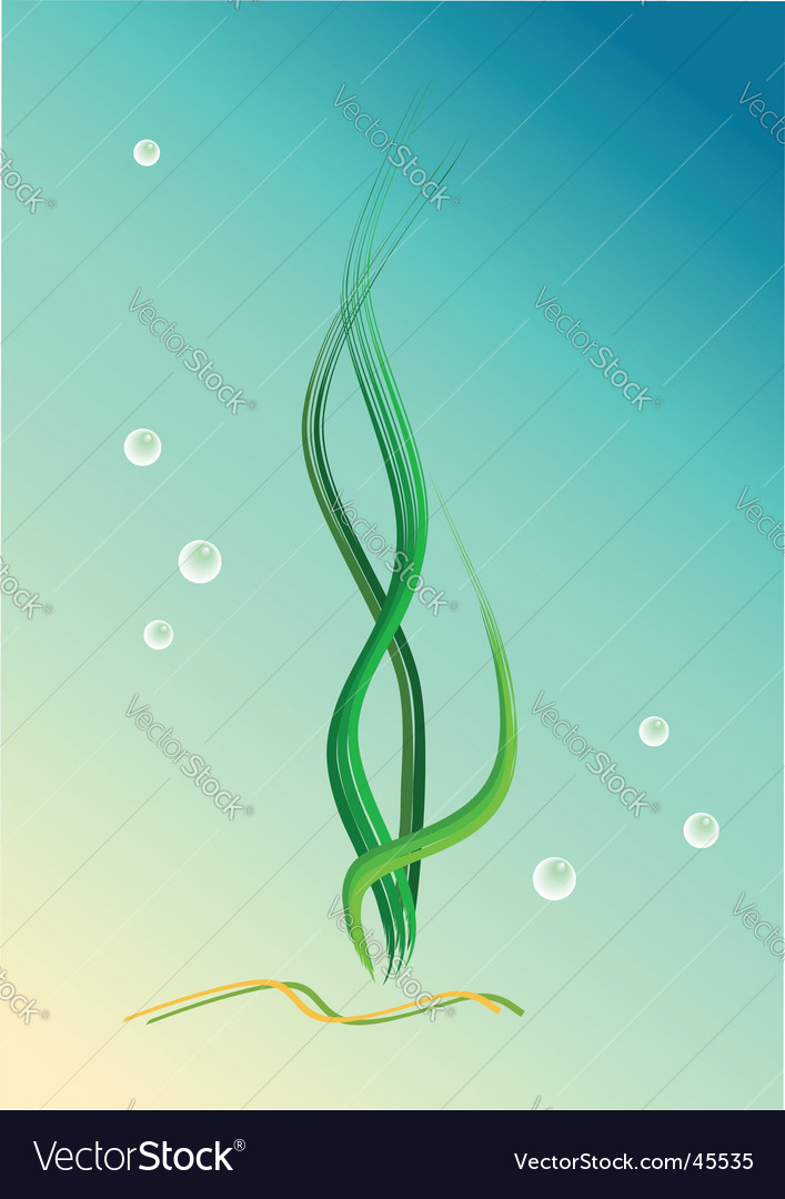 Seaweeds vector | Price: 1 Credit (USD $1)