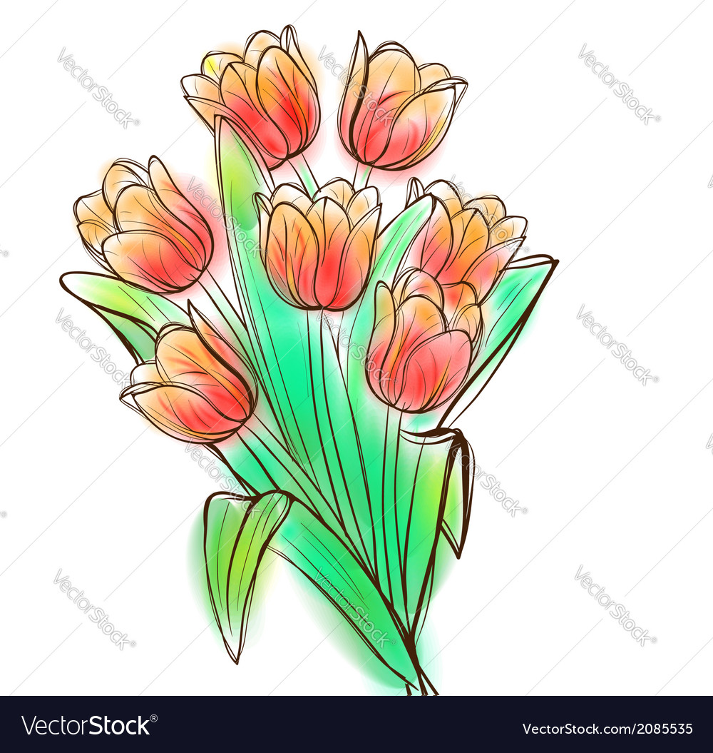 Watercolor tulips bouquet vector | Price: 1 Credit (USD $1)