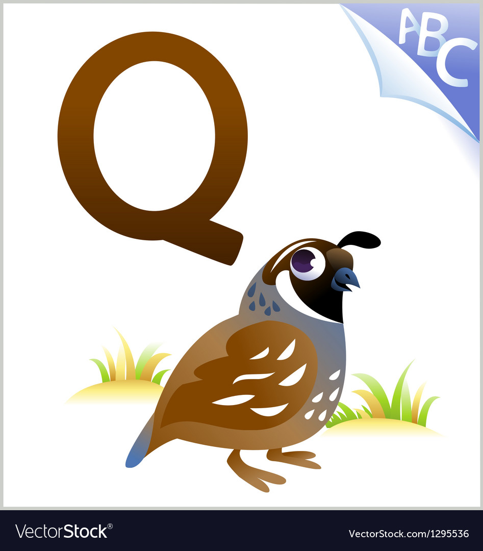 Animal alphabet for the kids q for the quail vector | Price: 1 Credit (USD $1)