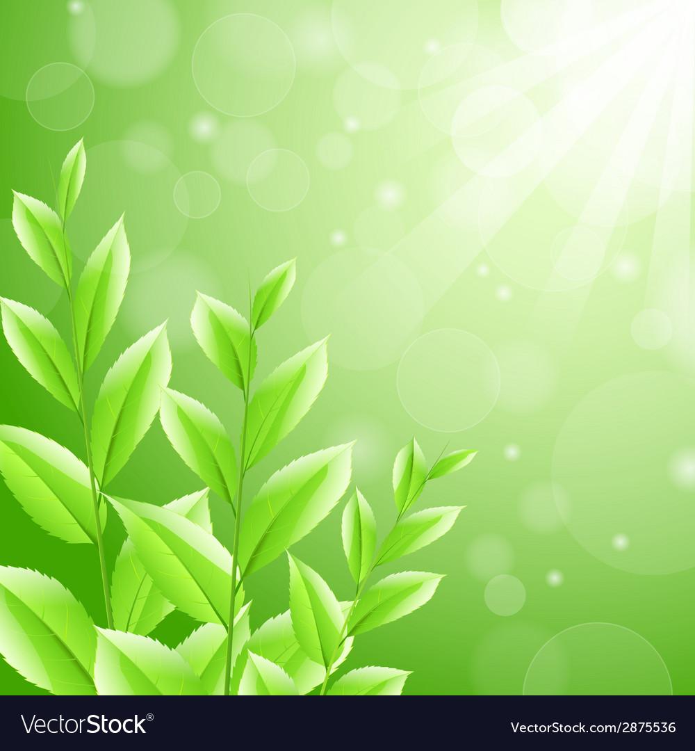 Sbackground green tea leaves vector   Price: 1 Credit (USD $1)