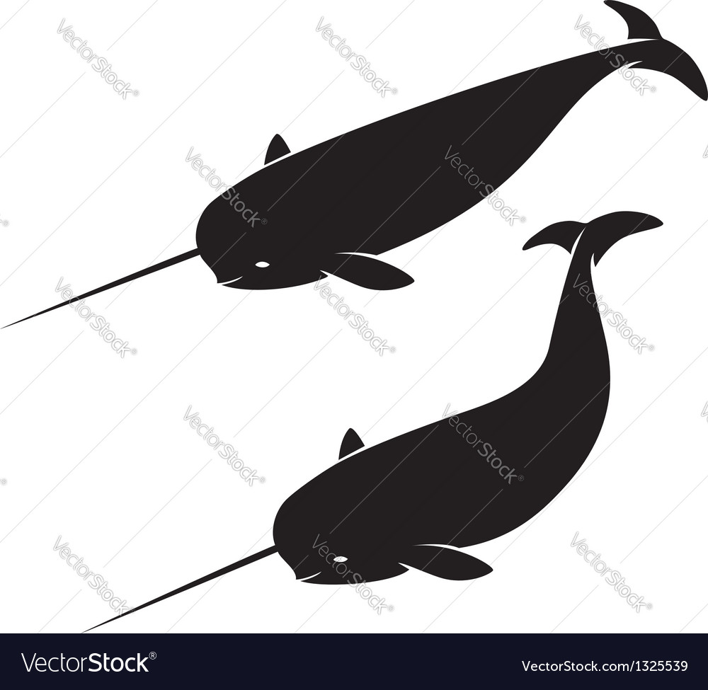 Narwhal vector | Price: 1 Credit (USD $1)