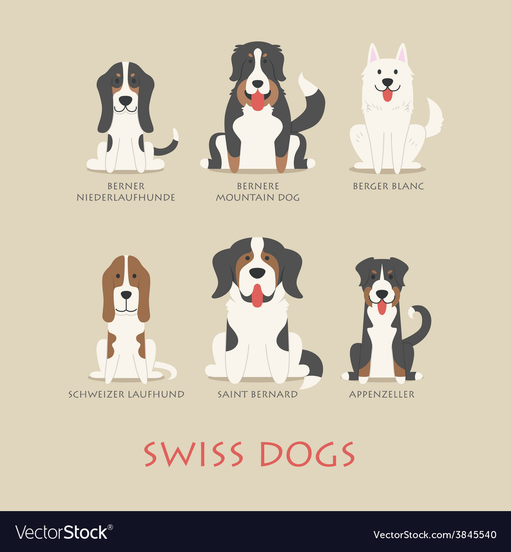 Set of swiss dogs vector | Price: 1 Credit (USD $1)