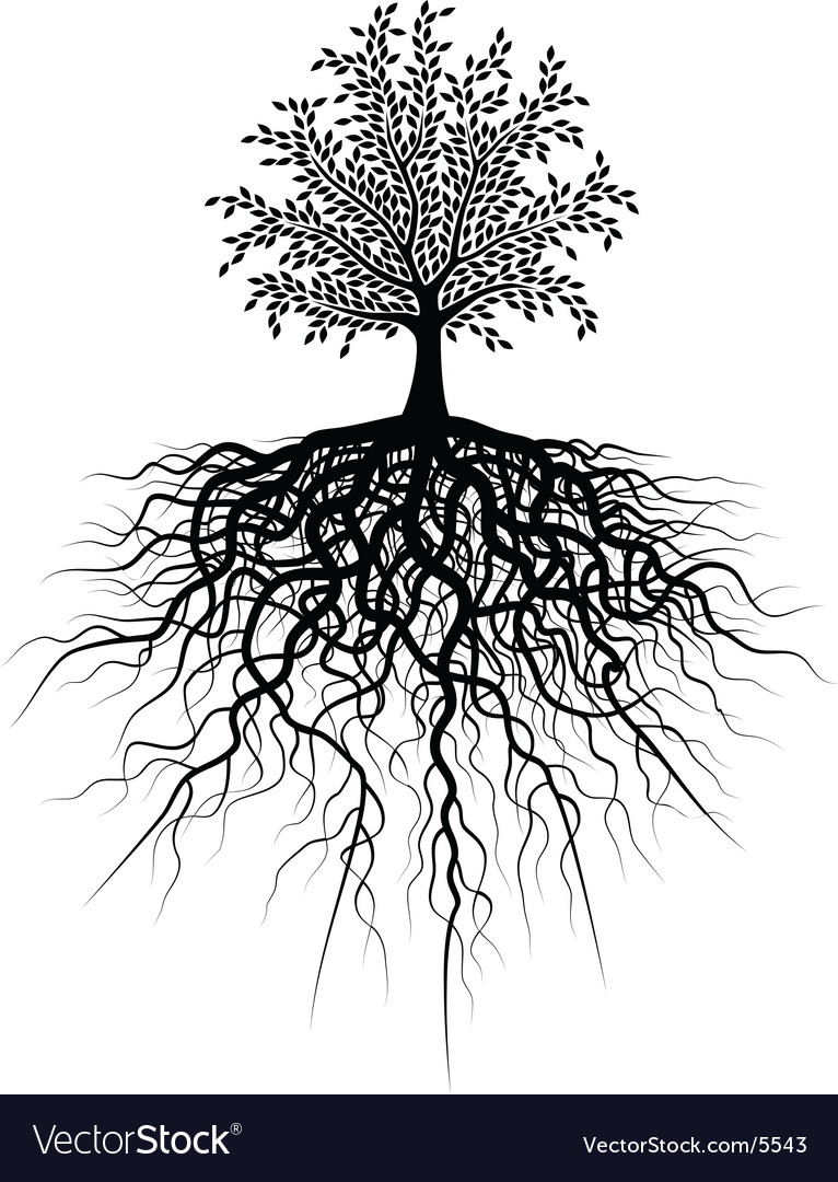 Root tree vector | Price: 1 Credit (USD $1)