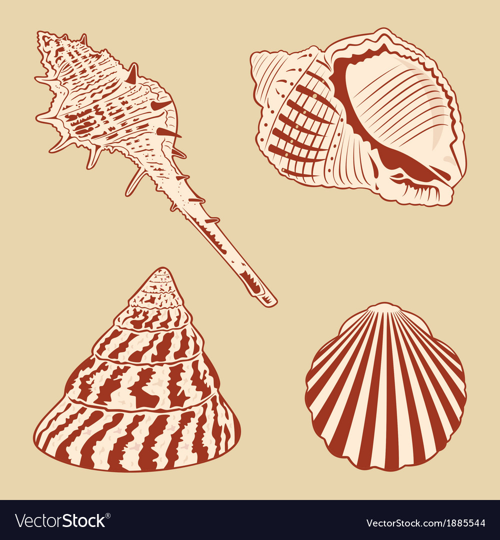 Vintage shells set eps10 vector | Price: 1 Credit (USD $1)