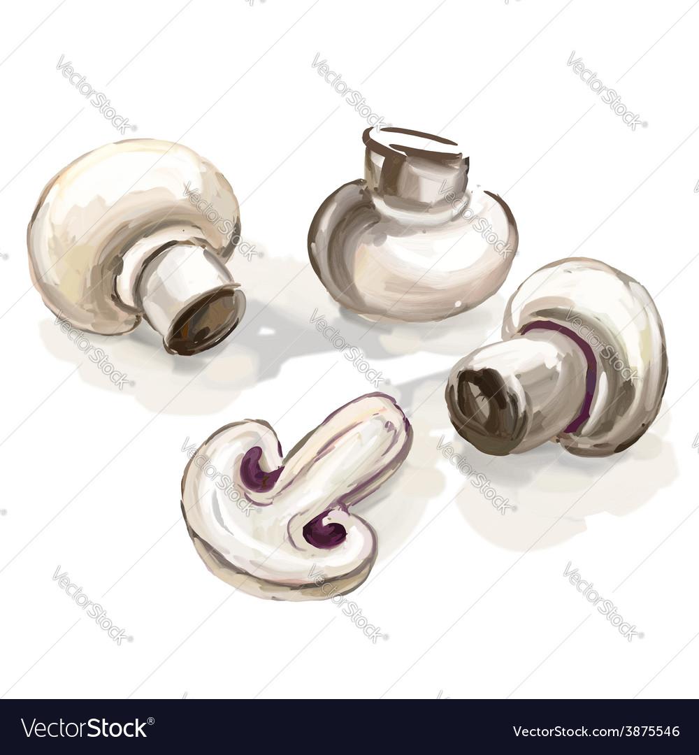 Mushroom hand drawn painted vector | Price: 1 Credit (USD $1)