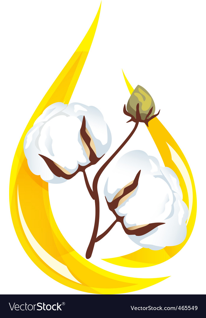 Cotton seed oil vector | Price: 1 Credit (USD $1)