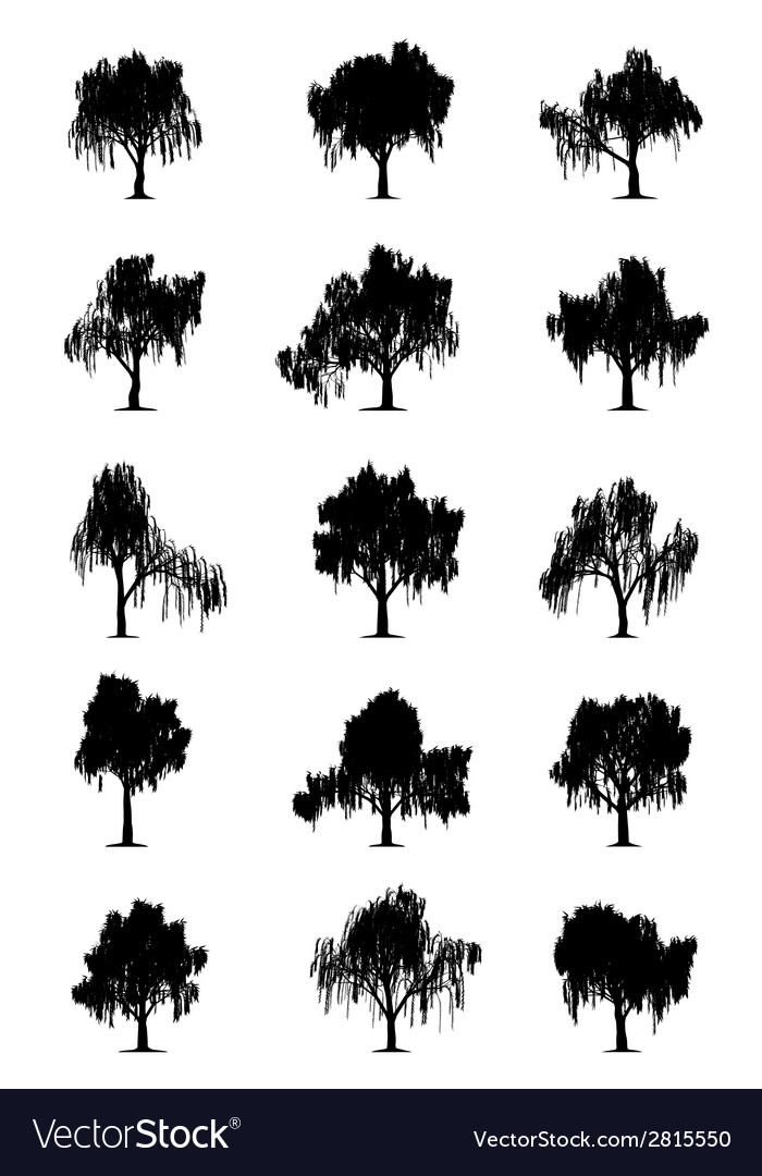 Weeping willows vector | Price: 1 Credit (USD $1)