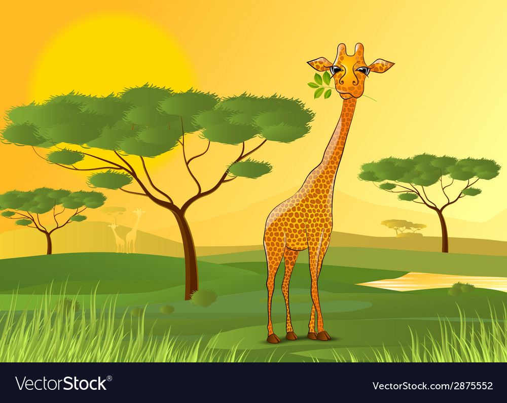 Giraffe eating leaves in africa at sunset vector | Price: 1 Credit (USD $1)