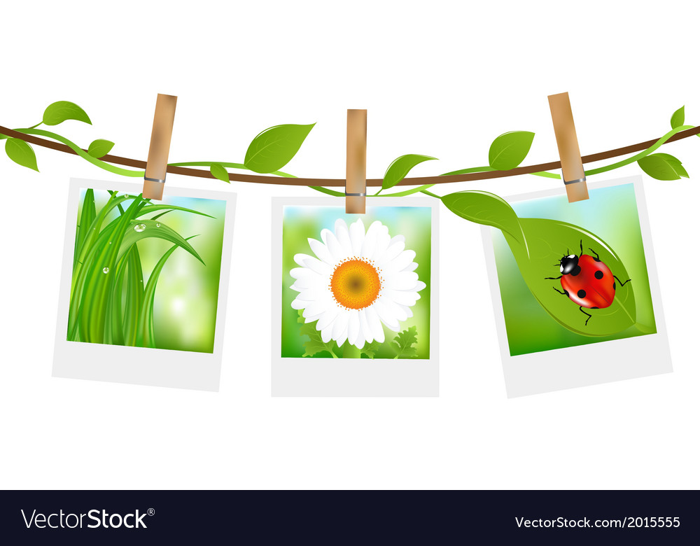 Summer photos with clothespins vector | Price: 1 Credit (USD $1)