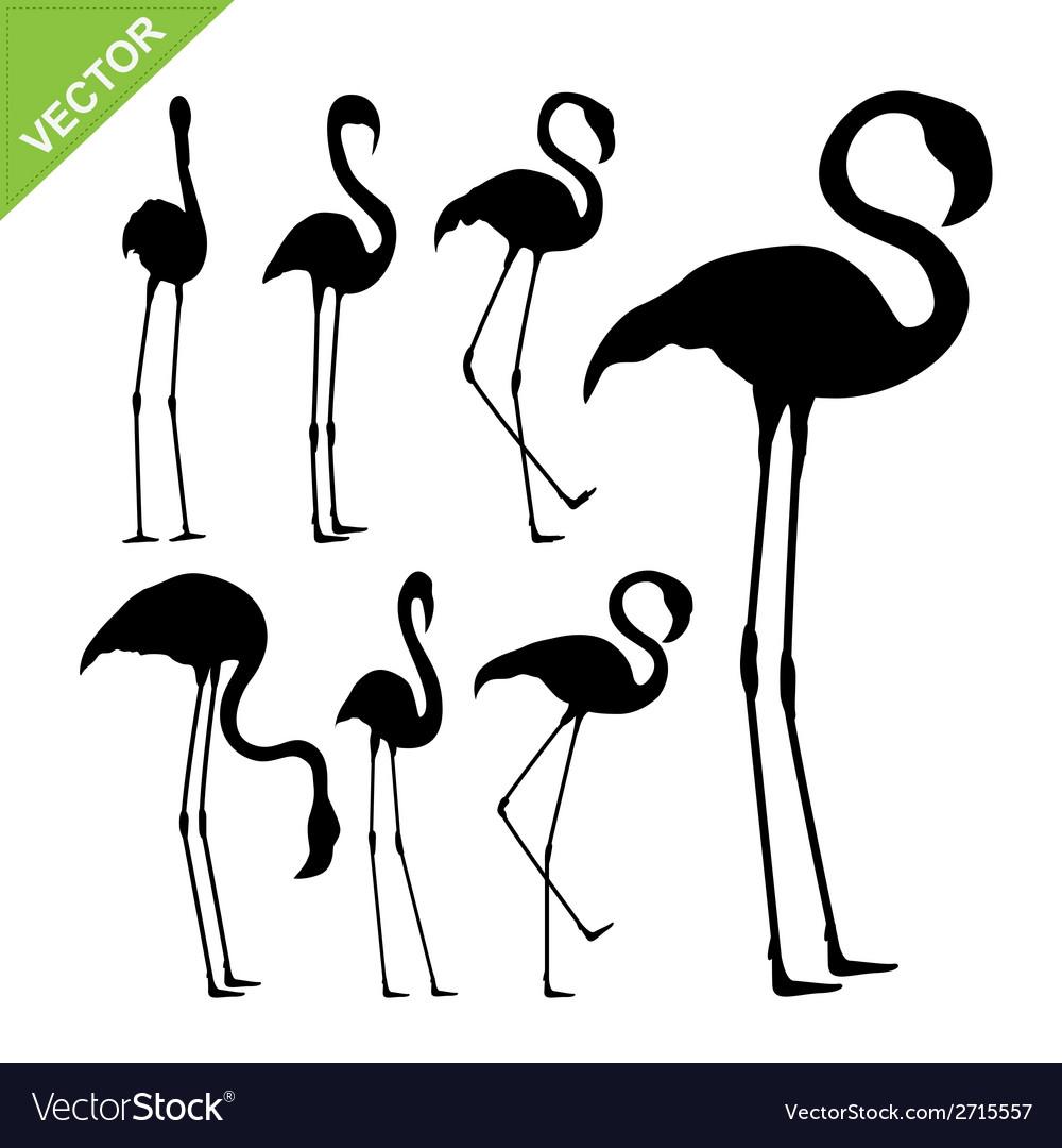 Flamingo bird silhouettes vector | Price: 1 Credit (USD $1)