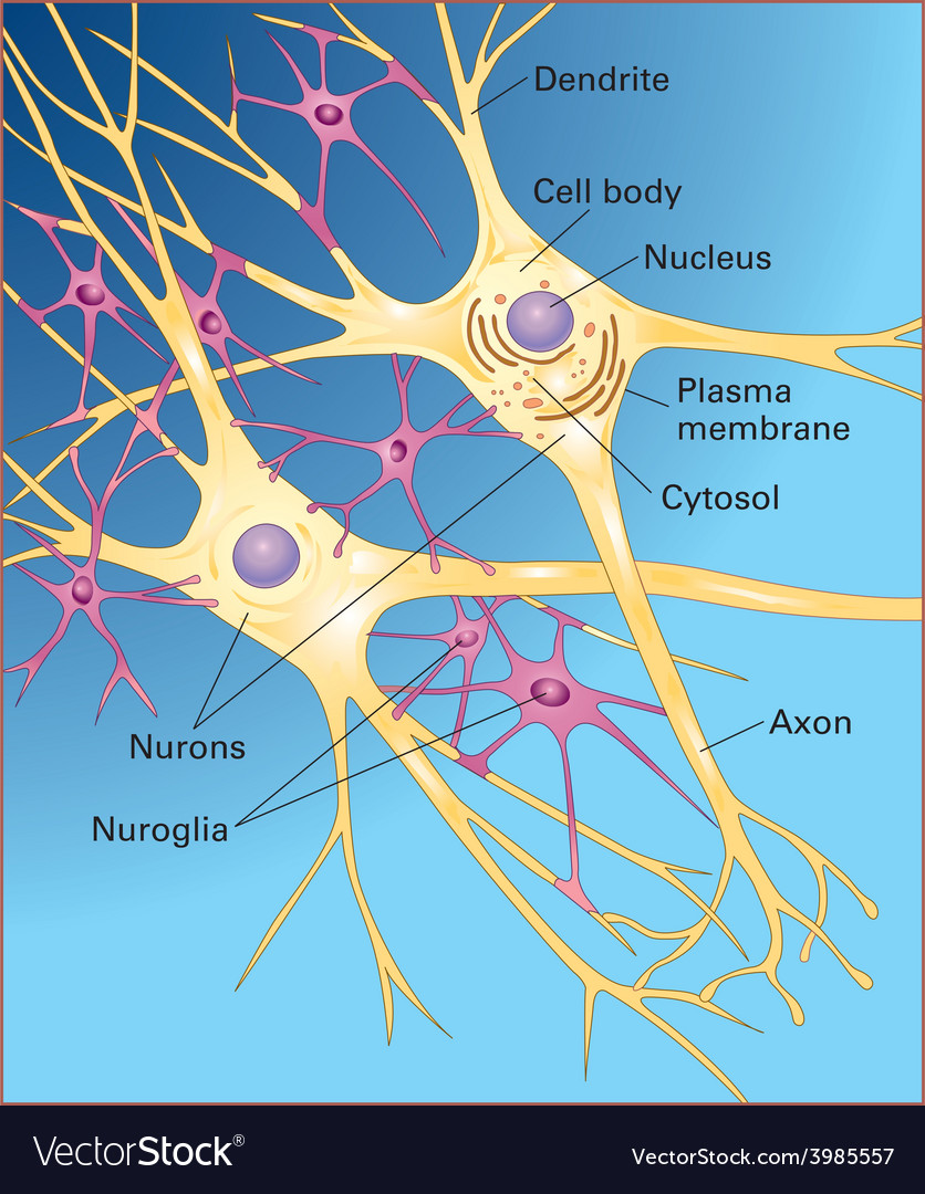 Neurons vector | Price: 1 Credit (USD $1)