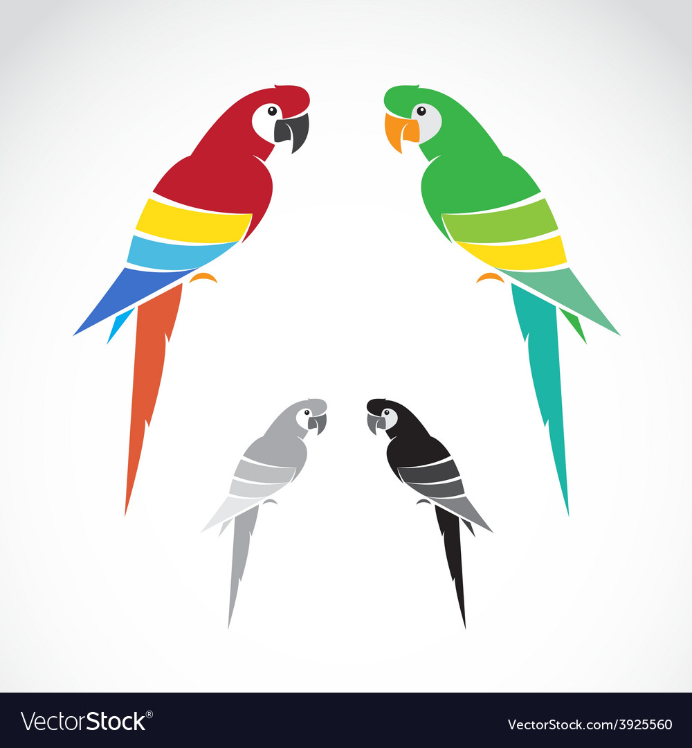 Image of a parrot vector | Price: 1 Credit (USD $1)