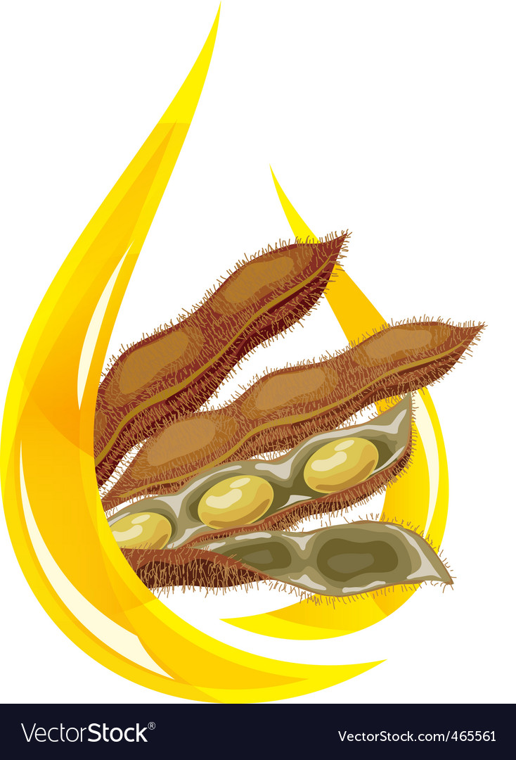 Soybean oil vector | Price: 1 Credit (USD $1)