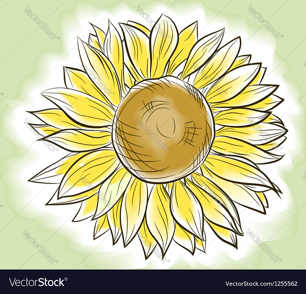 Flower sunflower painted imitating watercolor vector | Price: 1 Credit (USD $1)