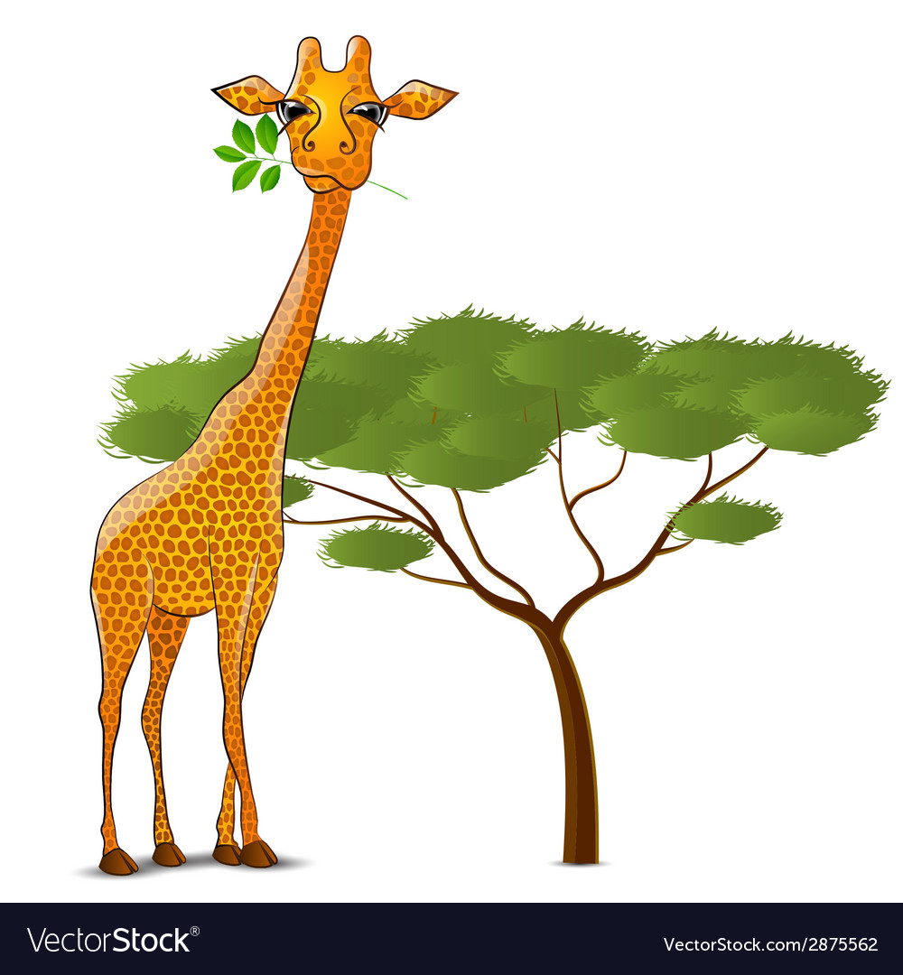 Giraffe eating leaves in africa isolated vector | Price: 1 Credit (USD $1)
