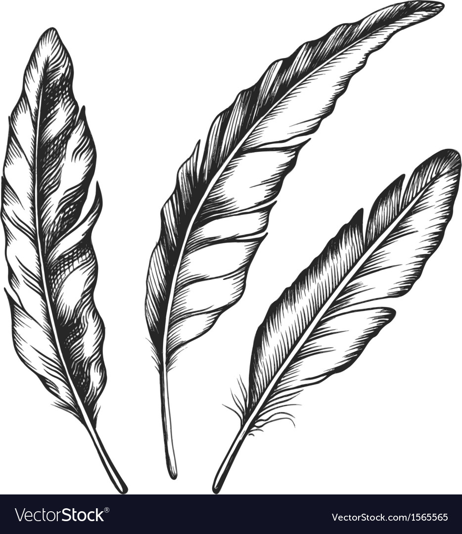 Black feathers three objects vector | Price: 1 Credit (USD $1)