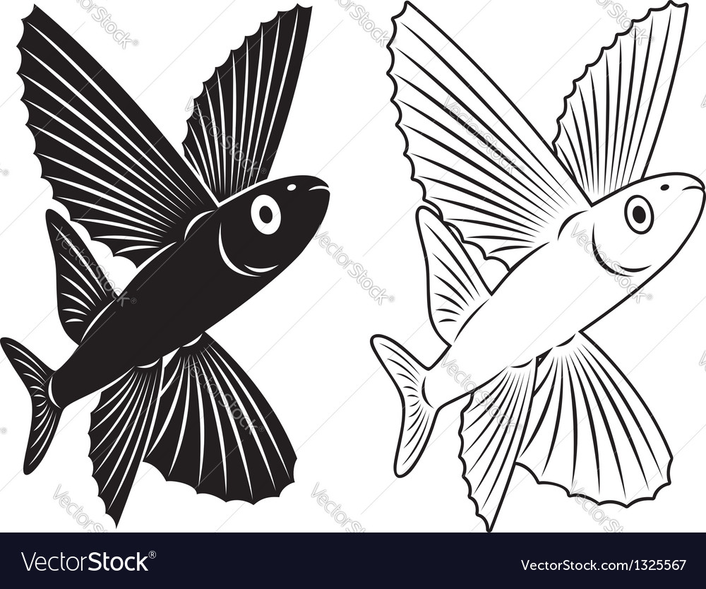 Flying fish vector | Price: 1 Credit (USD $1)