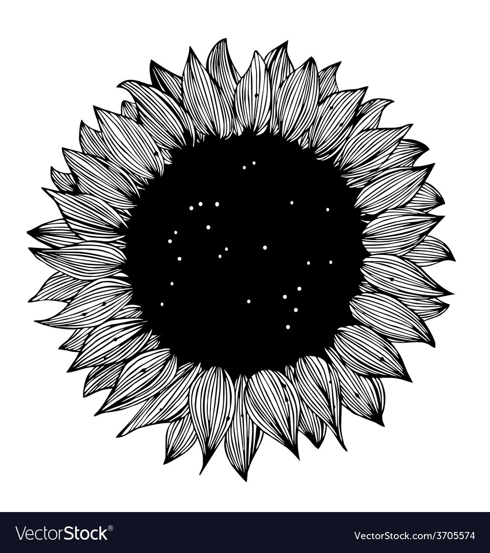 Sunflower background design vector