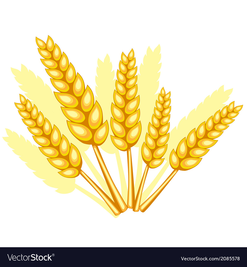 Wheat spikelets vector | Price: 1 Credit (USD $1)
