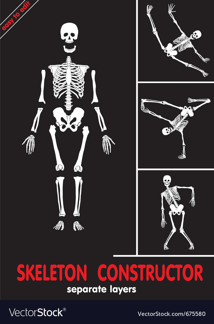 Human skeleton bones vector | Price: 1 Credit (USD $1)
