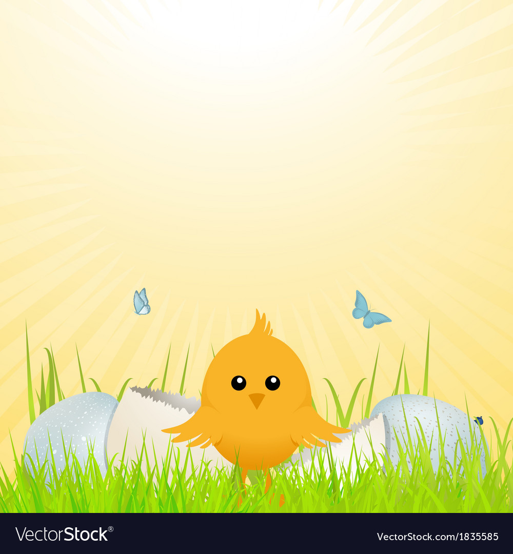 Easter chick with broken egg vector | Price: 1 Credit (USD $1)