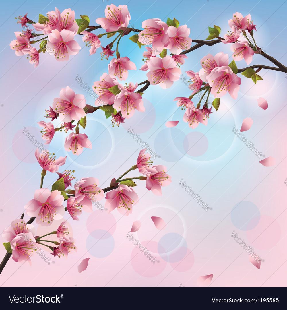 Light background with sakura blossom japanese vector | Price: 1 Credit (USD $1)