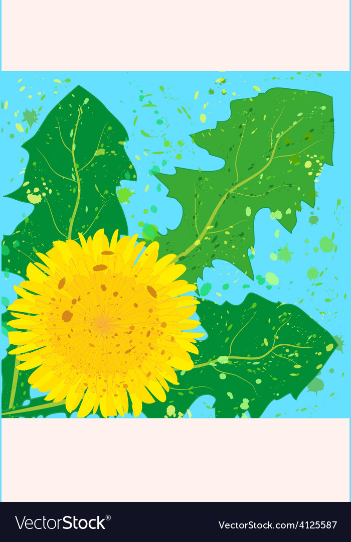 Square card yellow dandelion vector   Price: 1 Credit (USD $1)