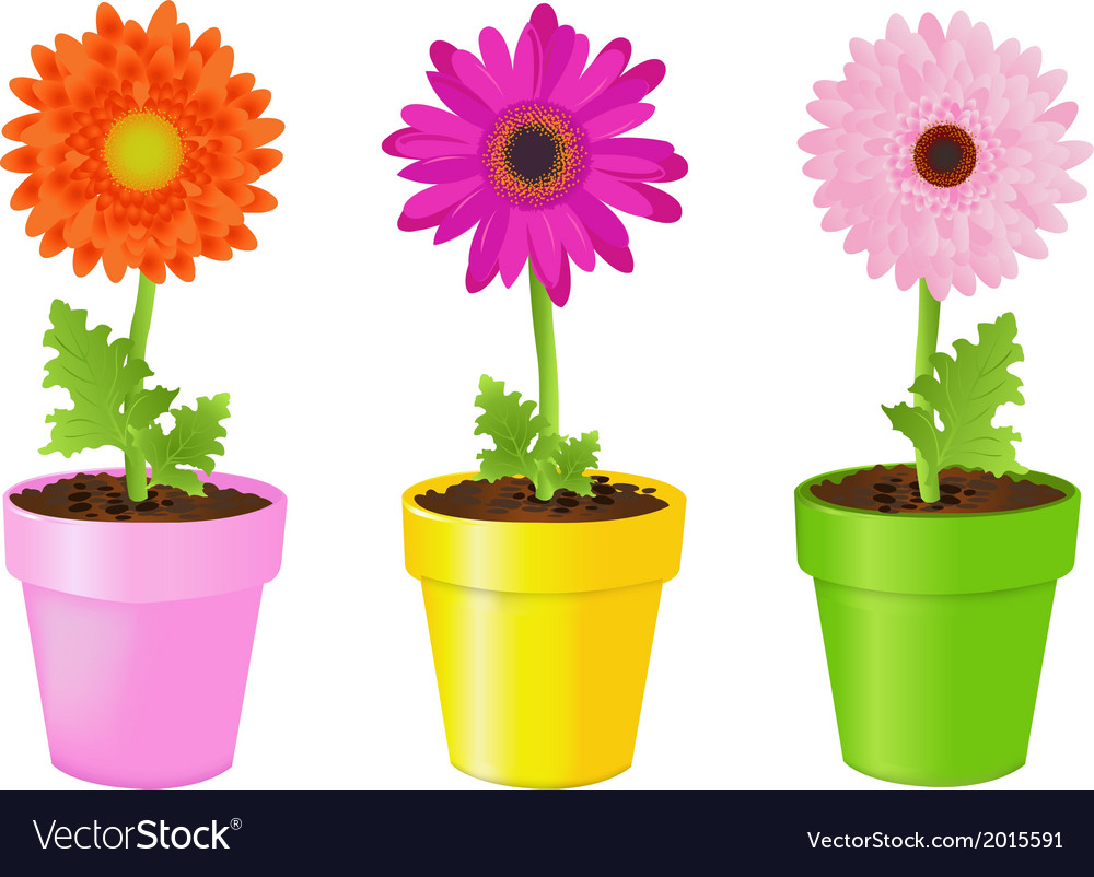 Colorful daisies in pots vector | Price: 1 Credit (USD $1)