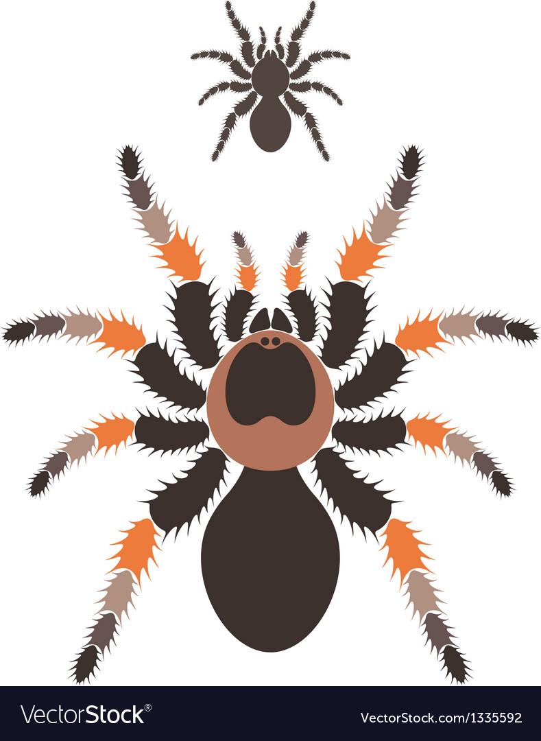 Tarantula vector | Price: 1 Credit (USD $1)