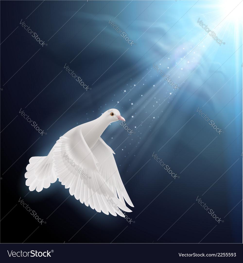 White dove in sunlight vector | Price: 1 Credit (USD $1)