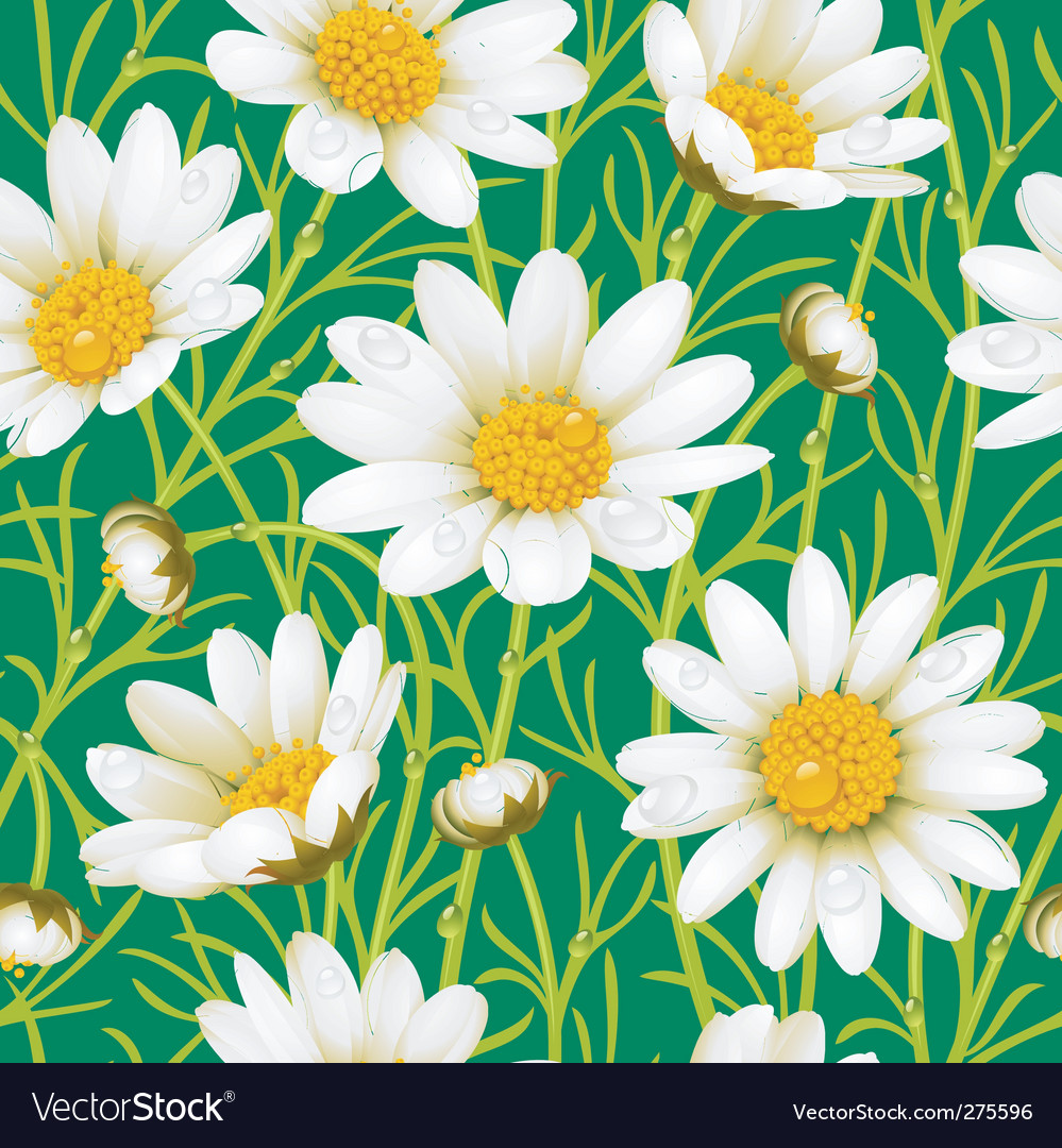 Chamomile seamless background vector | Price: 1 Credit (USD $1)