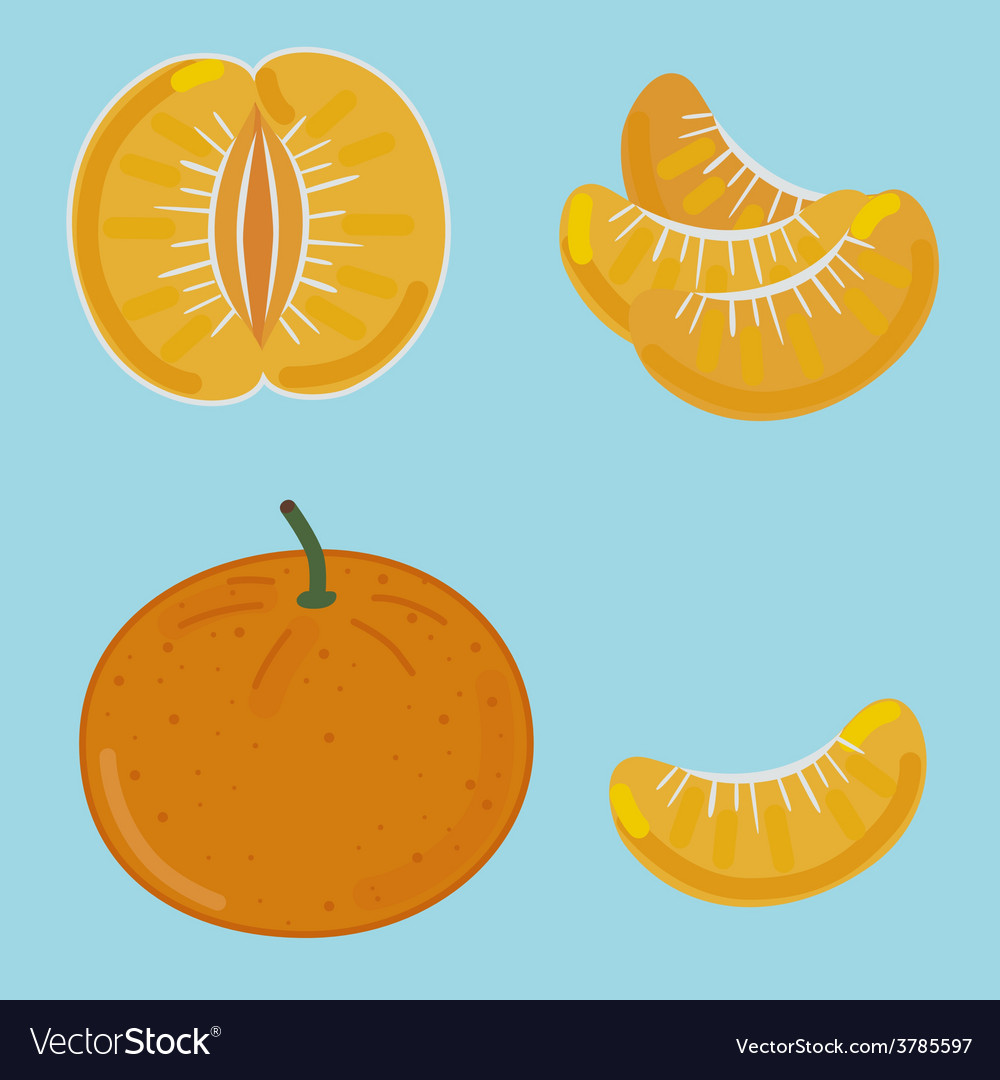 Mandarin by segments vector | Price: 1 Credit (USD $1)