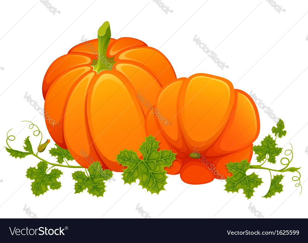 Two bright orange pumpkins with foliage on white vector | Price: 1 Credit (USD $1)