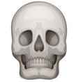 A human skull vector