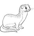 Weasel animal cartoon coloring book vector