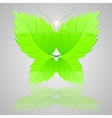 Butterfly from green leaves vector
