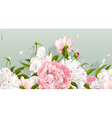 Peony background vector