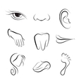 Set of icons human body parts vector