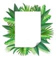 Blank paper tropical leaves vector