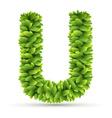 Letter u alphabet of green leaves vector