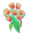 Watercolor tulips bouquet vector