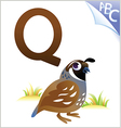 Animal alphabet for the kids q for the quail vector