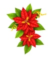 Christmas star flowers vector