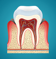 Starting disease gum and caries on human teeth vector