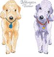 Two dogs bedlington terrier breed vector