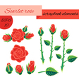 Scarlet rose scrapbook elements vector